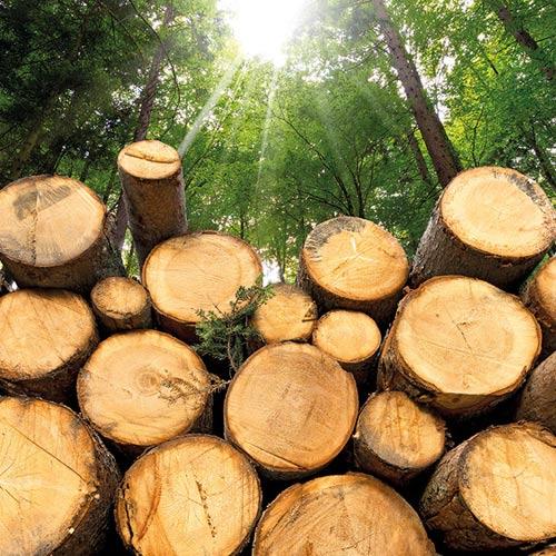 tecnología Biomasa